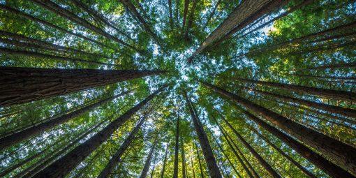 Corporate Social Responsibility: un nuovo servizio per lo sviluppo sostenibile delle imprese