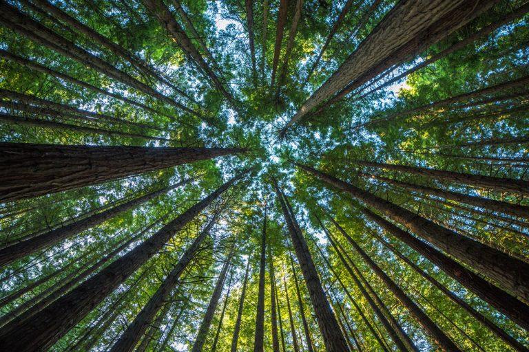 Corporate Social Responsability: un nuovo servizio per lo sviluppo sostenibile delle imprese